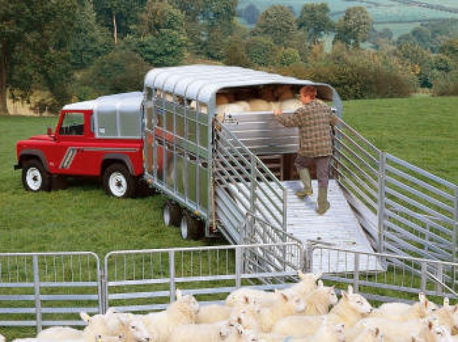 Ifor Williams Livestock Trailers DP120 Models