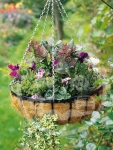 Stylish Durable Hanging Baskets